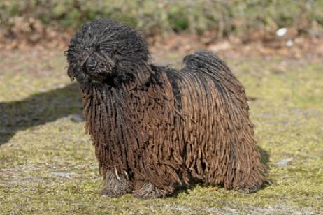 Perros De Agua Toda La Información Sobre Estos Bonitos Perros