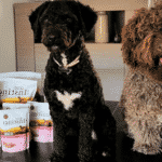 Como alimentar un perro de aguas
