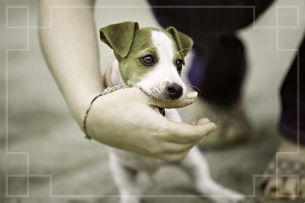 como curar la mordida de un perro