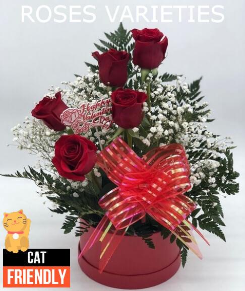 Plantas seguras para gatos roses varieties