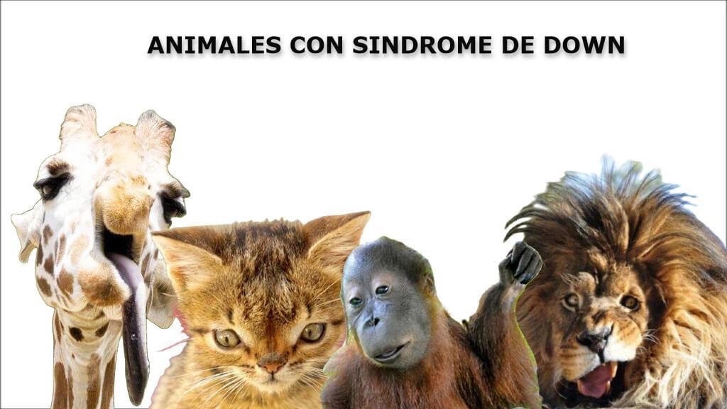 animales con sindrome de down