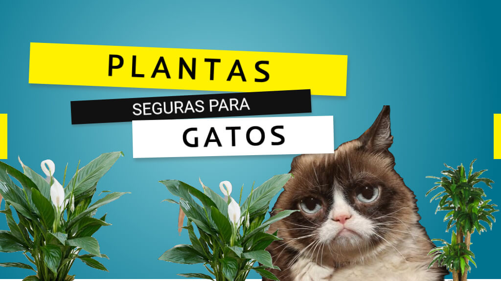 plantas seguras para gatos